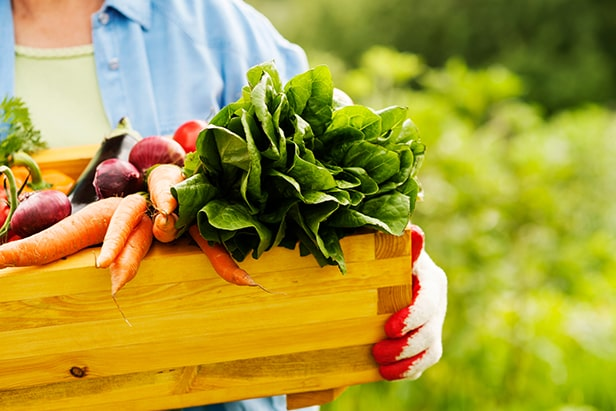 Tips Growing Own Fruit And Veg Smarter Living Electric
